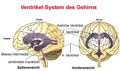 Liquor ventrikelsystem karteikarten online lernen for Boden 4 ventrikel