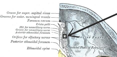 Anatomy 6 (Skull), Anatomy 9 (scalp only) | Karteikarten ...