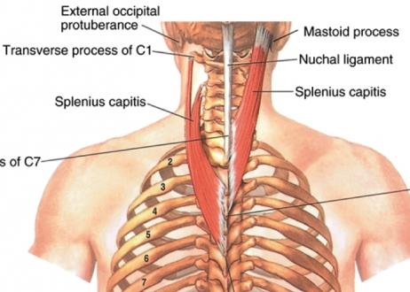 AnatomiePhysiologie - Bewegungsapparat der Haussäugetieren | Learn ...