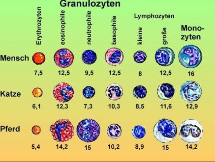 Einführung in die AnatomiePhysiologie der Zelle und des Zellgewebes ...